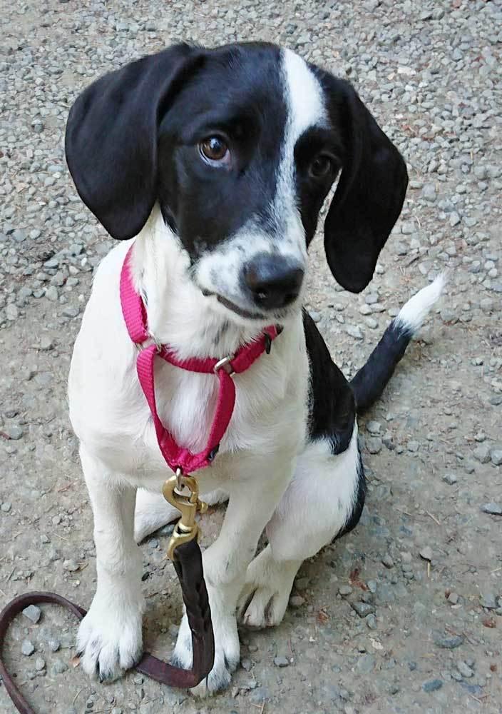 Millie the puppy 1