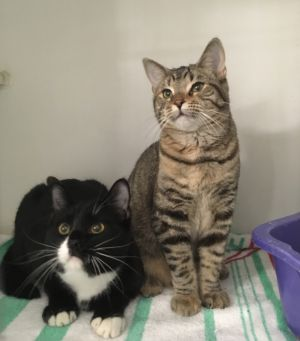 Aladdin and Jasmine are two sweet and playful bonded siblings who cant wait to find their new home