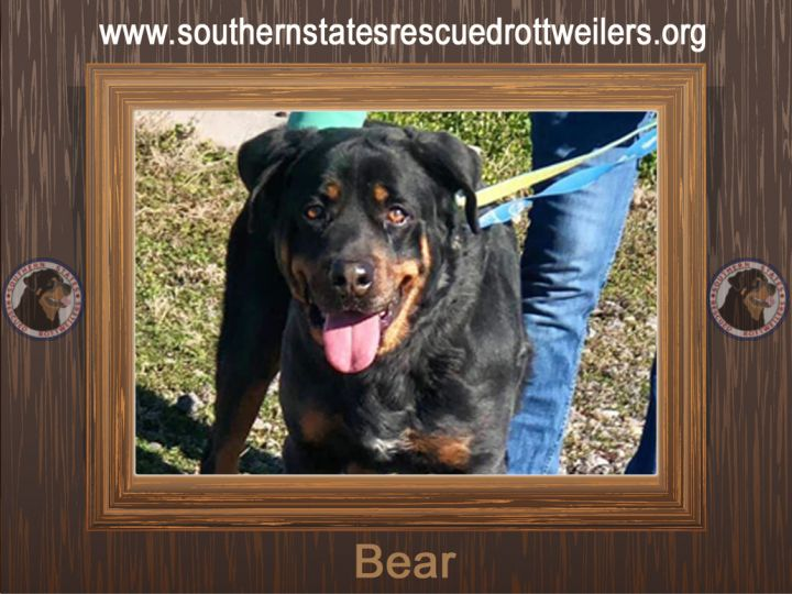 Bear, an adopted Rottweiler in Irmo, SC
