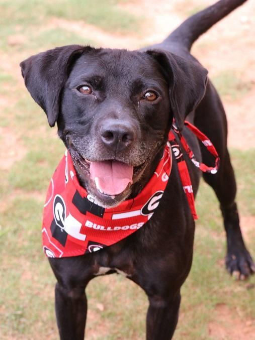 Dog for adoption - Blackie, a Mixed Breed in Athens, GA