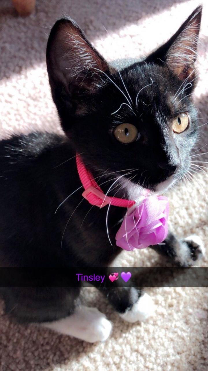 Tinsley 3