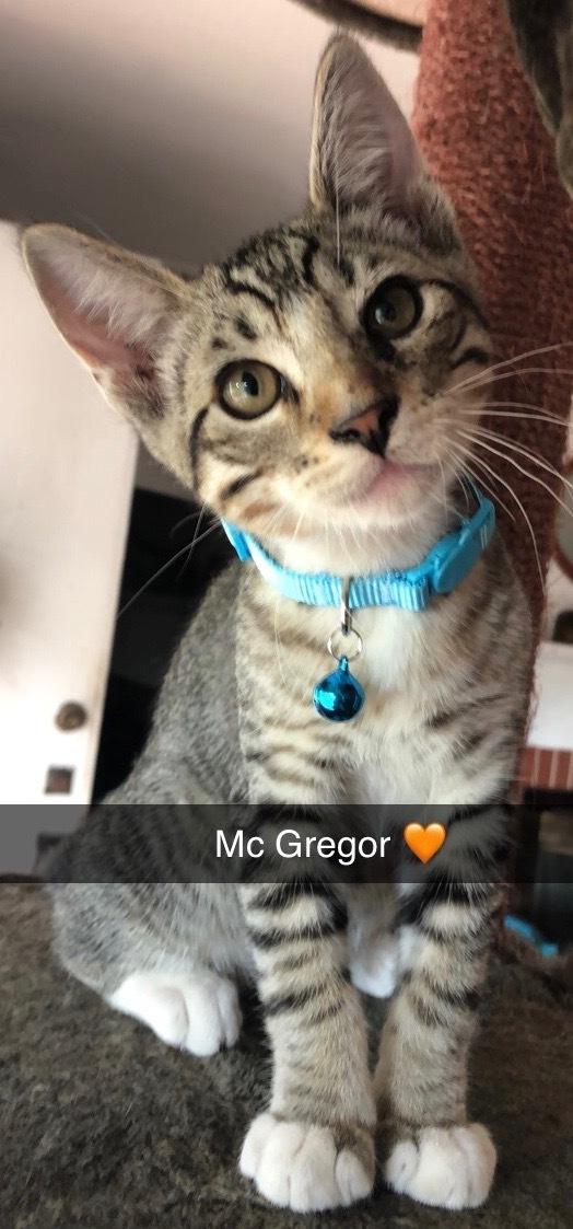 McGregor 2