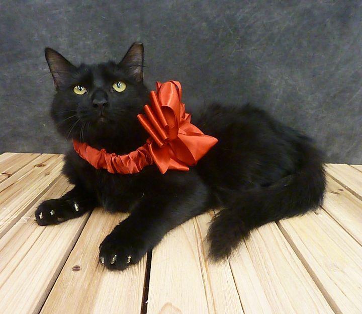 Party - Black Fluffy Kitten 2