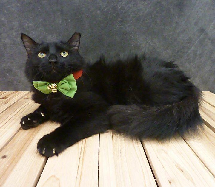 Party - Black Fluffy Kitten 3
