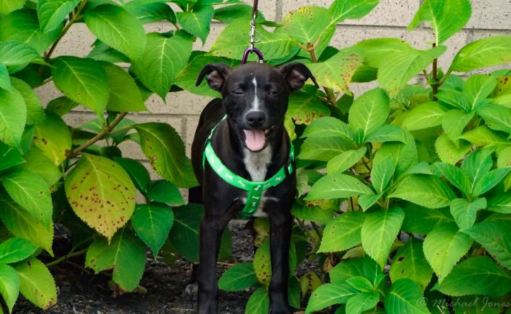 Johnny, an adopted Mixed Breed in Lexington, KY