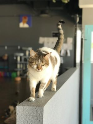 Ruby - I'm a purrfect fit for any family!