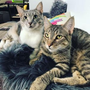 BenBen and Lilac - BONDED PAIR ALERT!