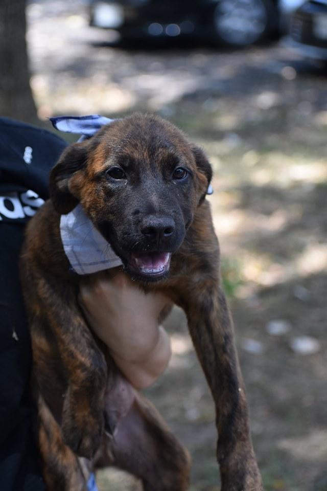 Dog for adoption - Barney, a Labrador Retriever Mix in Seven