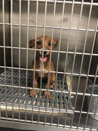 Dog for adoption - jill, a Fox Terrier Mix in Thomasville