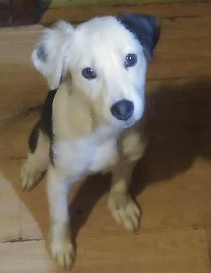 Dog for adoption - Mollie - gorgeous girl, a Border Collie