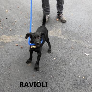 Ravioli 2