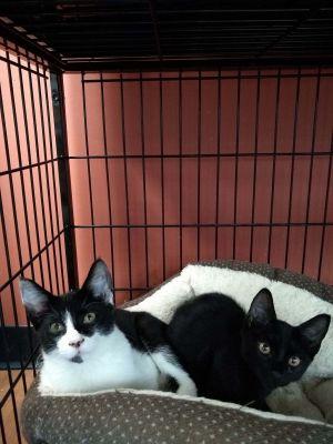 Burt & Ernie (Pet Valu)
