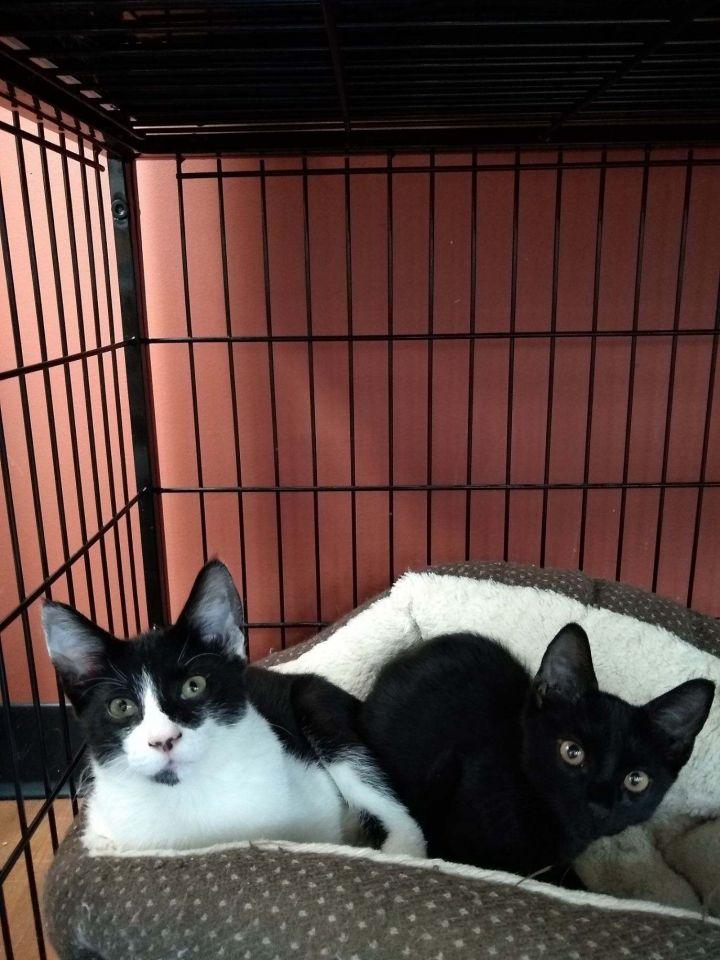 Burt & Ernie (Pet Valu) 1