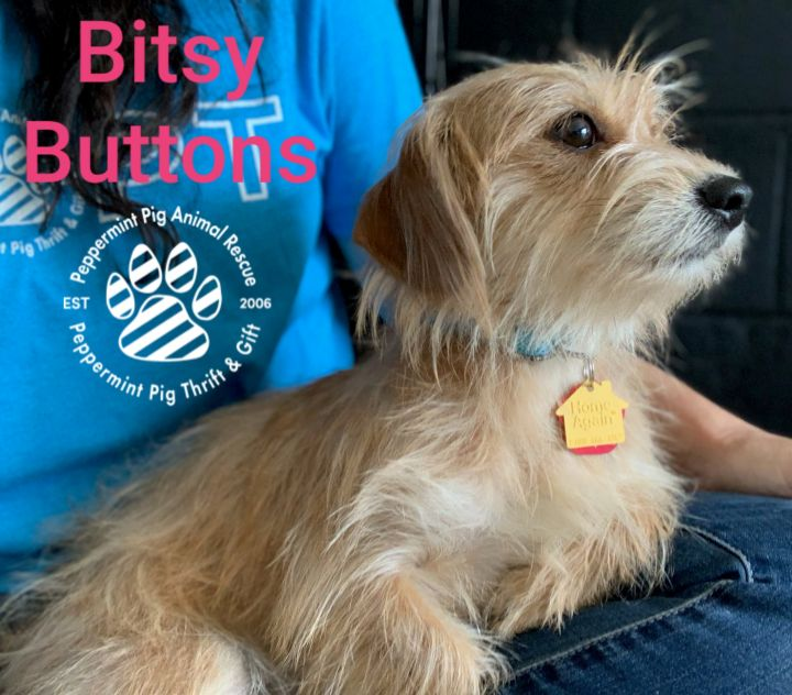 Bitsy Buttons ADOPTION PENDING 2