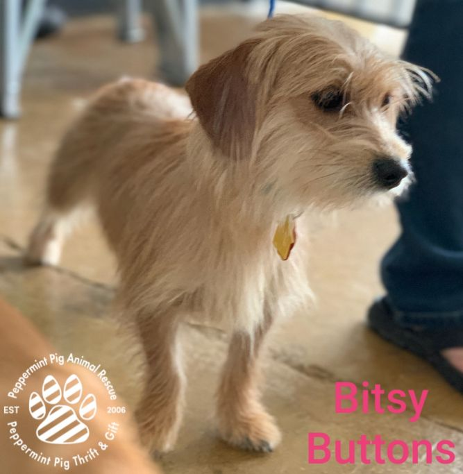 Bitsy Buttons ADOPTION PENDING