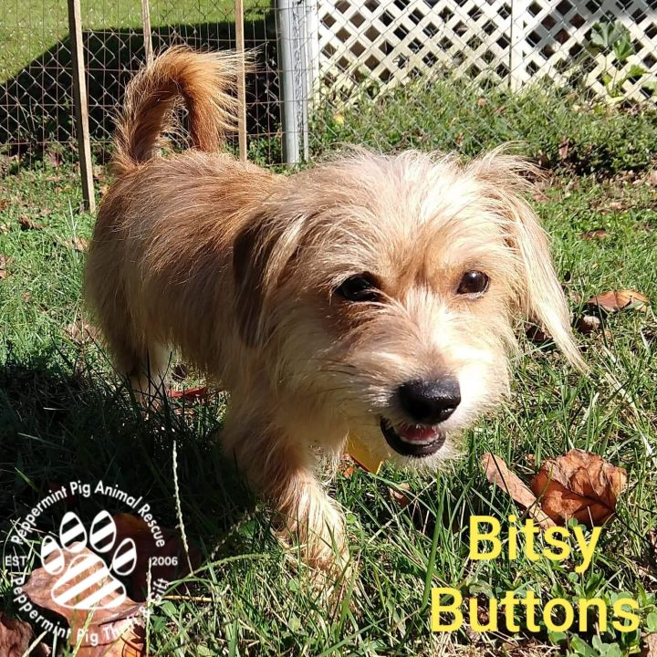 Bitsy Buttons ADOPTION PENDING 4