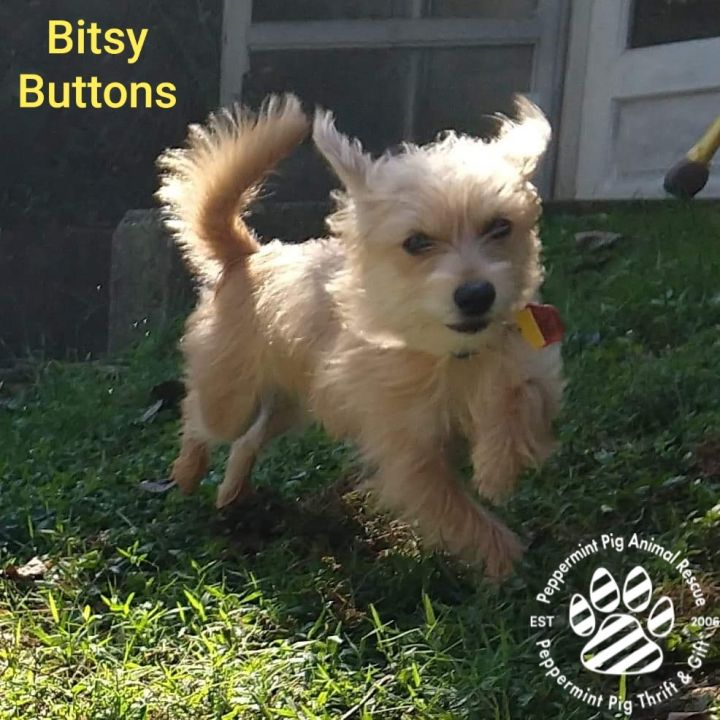 Bitsy Buttons ADOPTION PENDING 6