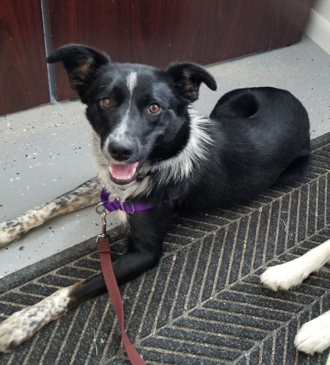 Andie Faith (Courtest Listing-Dog is NOT at the Shelter)
