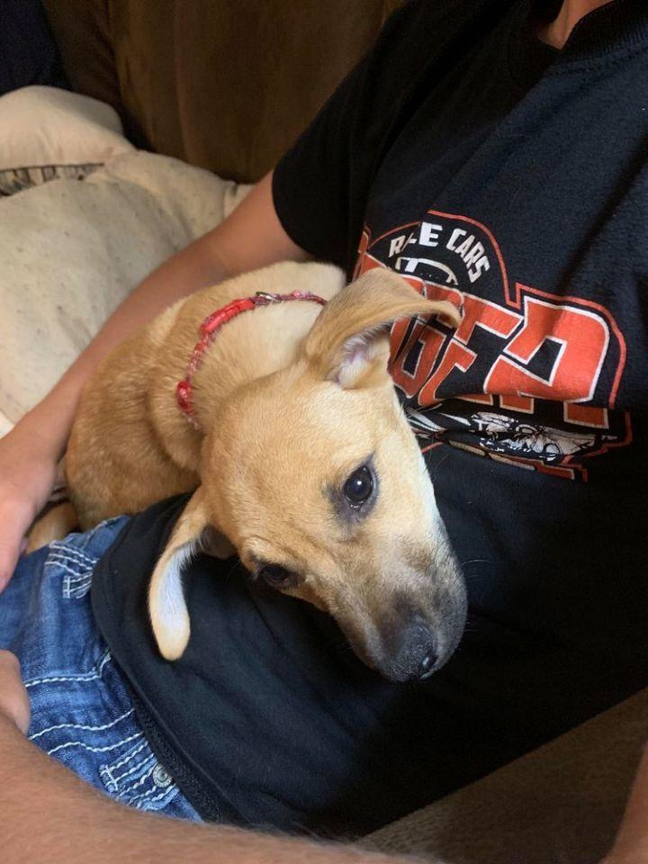 Dog for adoption - Jaycee, a German Shepherd Dog Mix in