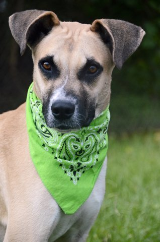 Vincent, an adoptable Shepherd Mix in Carencro, LA