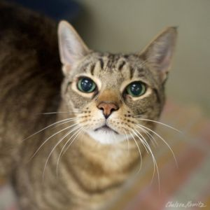Jovi was originally a kitten with us and quickly adopted Unfortunately after b
