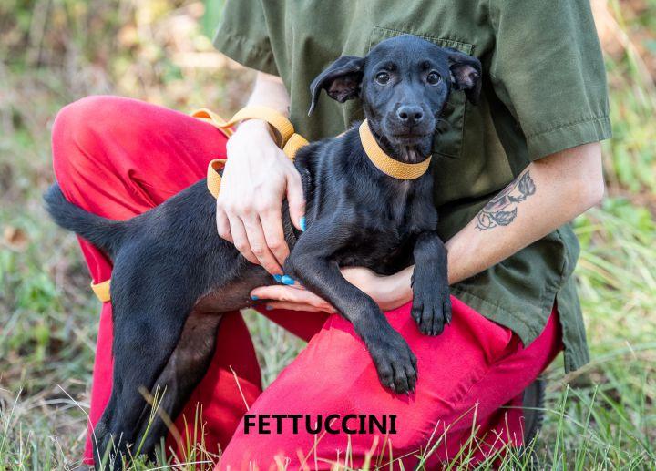 Fettuccine 3