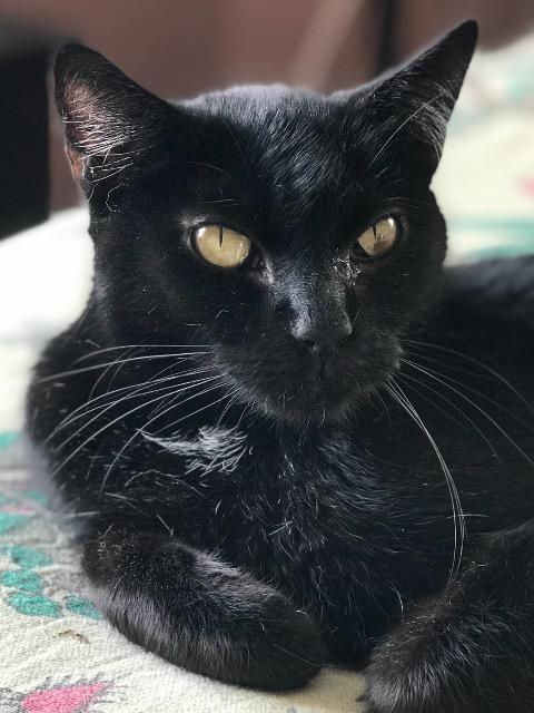 Blackie 6