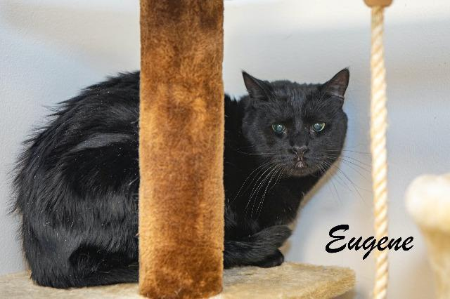 Eugene 1