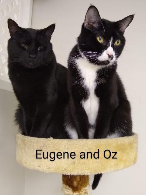 Eugene 4