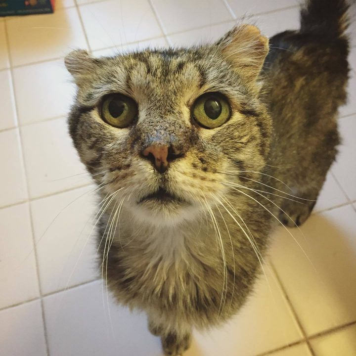 BOYD!, an adopted Domestic Short Hair in Philadelphia, PA