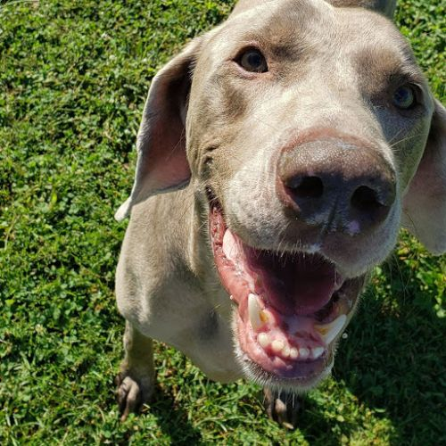 Dogs available for adoption at Father John's Animal House