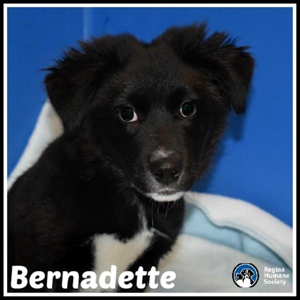 Dog for adoption - Bernadette*, a Border Collie Mix in