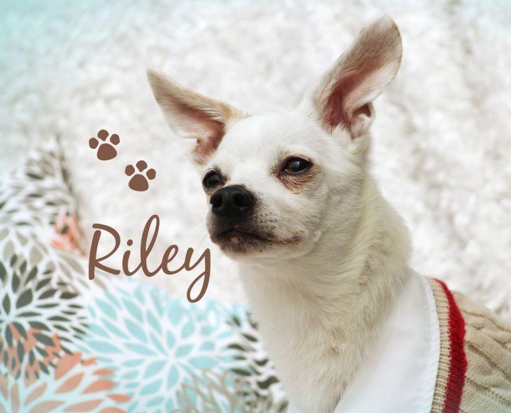 Riley 1