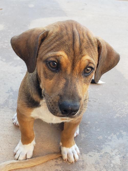 Dog for adoption - NCIS - Tim McGee, a Labrador Retriever