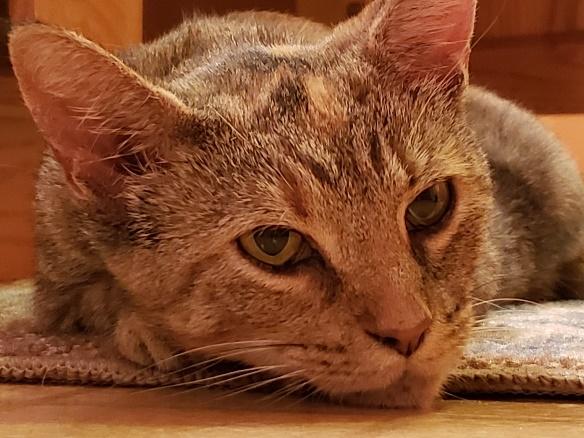 Grey Kitty 1