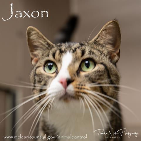 JAXON 1
