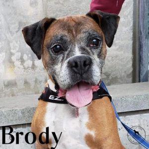 . Brody .