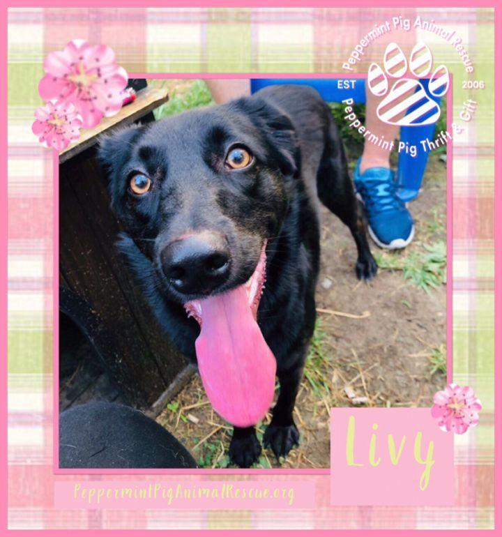 Livy 3