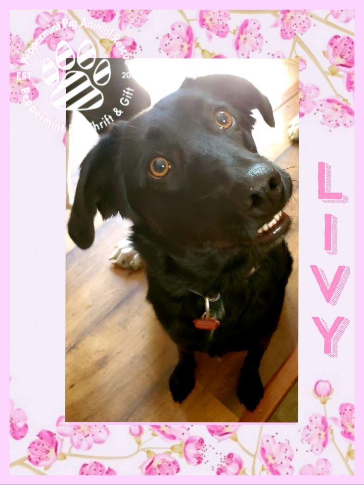 Livy 6