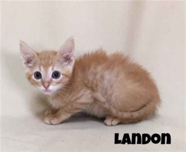 Landon 1