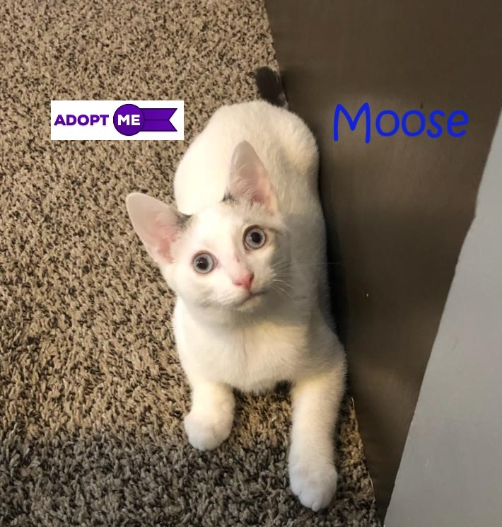 Moose (Kailee's foster) 2