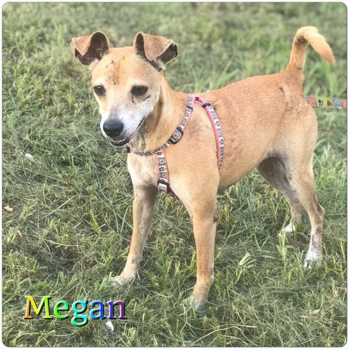 Megan 1