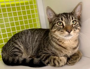 This handsome boy is Marius Marius is very affectionate and sweet but he needs a special adopter wh