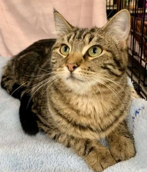 Say hello to Tucker Tucker is such a sweet little boy He loves to be petted and will occasionally