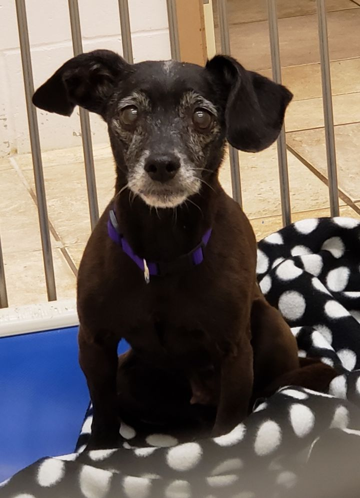 Margie, an adopted Terrier Mix in Brainerd, MN