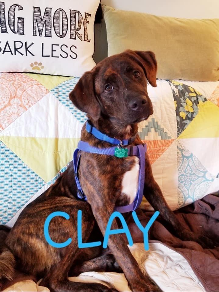 Clay 6
