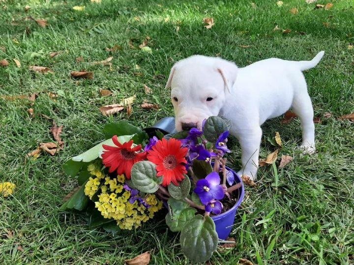 Jim, an adoptable Terrier Mix in Lake Odessa, MI