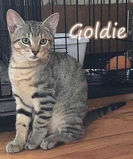 Goldie 1