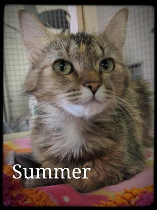 Summer, an adoptable Domestic Medium Hair in Prineville, OR
