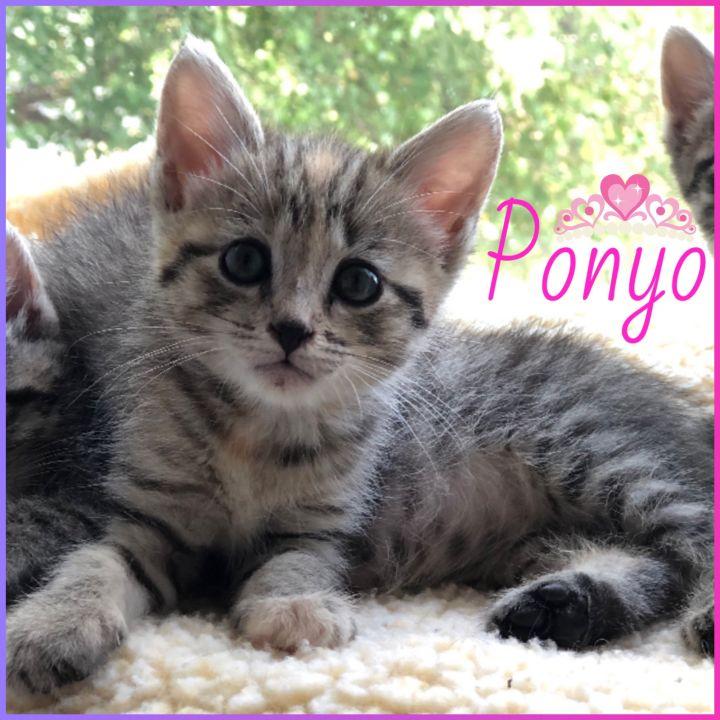 Ponyo 3